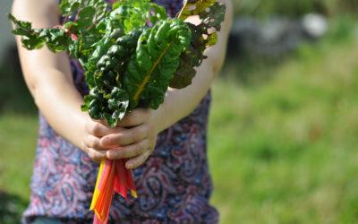 Food as Self care
